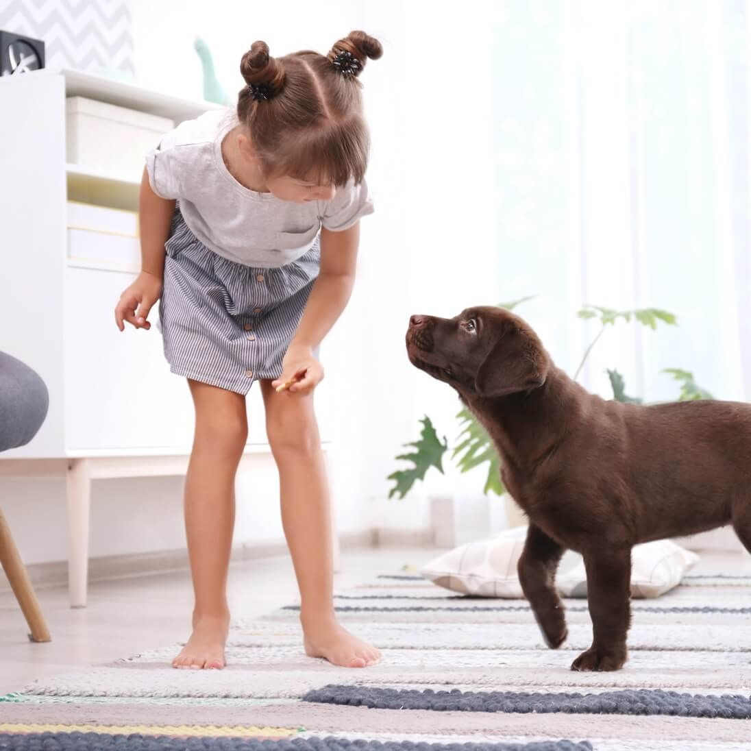 Puppy & Intro Adult Dog Training Package